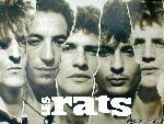 Les rats lesrats5 1 24 jpg