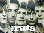 Les rats th lesrats5 jpg