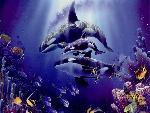 baleines baleines  7 jpg