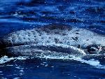 baleines baleines  9 jpg