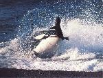 baleines baleines 15 jpg