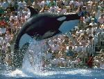 baleines baleines 17 jpg