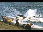 baleines baleines 18 jpg