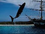 baleines baleines 21 jpg