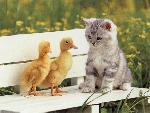 chats cats 17 jpg