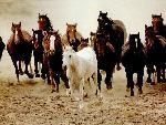 chevaux  3 jpg