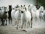 chevaux  4 jpg