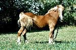 chevaux chevaux 44 jpg
