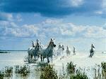 chevaux chevaux 62 jpg