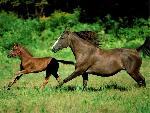 chevaux chevaux 69 jpg