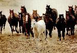 chevaux chevaux 175 jpg