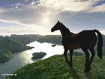 chevaux chevaux 176 jpg