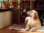 chien A Dog Day Afternoon jpg