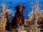 chien Dog and Cattails jpg