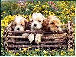 chiens chiens 28 jpg