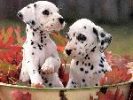 chiens chiens 1  jpg