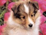 chiens chiens 1 1 jpg