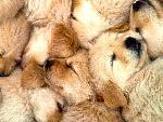chiens chiens 11 jpg