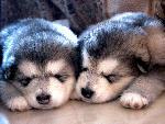 chiens chiens 111 jpg