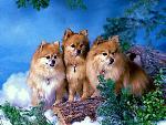 chiens chiens 165 jpg