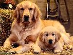 chiens dogs 12 jpg