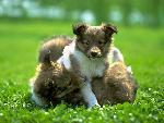 chiens dogs 13 jpg