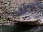 crocodiles crocodile 8 jpg