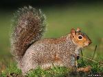 ecureuil ecureuil 16 jpg