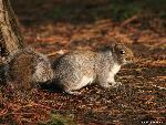 ecureuil ecureuil 17 jpg