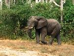 elephants elephants 1 jpg
