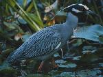 oiseaux bird 6 jpg