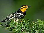 oiseaux bird 8 jpg
