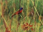 oiseaux bird 9 jpg