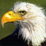 oiseaux bird 11 jpg