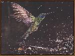 oiseaux bird 14 jpg