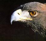 oiseaux bird 15 jpg