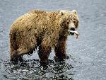 ours bears  6 jpg