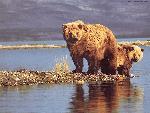 ours bears 1 jpg