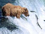 ours bears 11 jpg