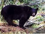 ours bears 12 jpg