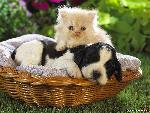 pet Pets 18 jpg