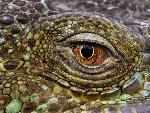 reptiles Monitoring jpg