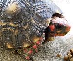 tortues tortue 23 jpg