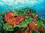 vie ocean 32 1 24 jpg
