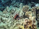 vie ocean 37 1 24 jpg