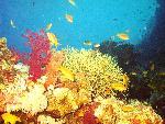 vie ocean 38 1 24 jpg
