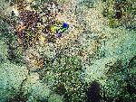 vie ocean 4 1 24 jpg