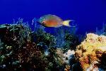 vie ocean P 3 2139 JPG