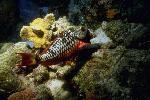 vie ocean P 3 2143 JPG
