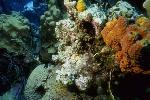 vie ocean P 3 217 JPG